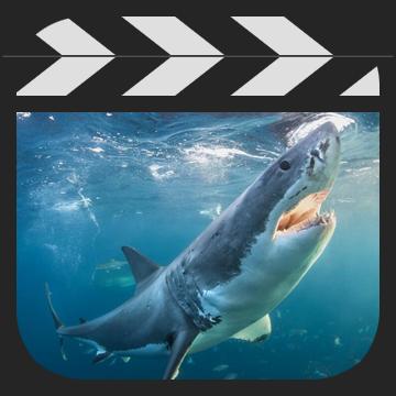 二次元BUG高级动画教程之动物篇(鲨鱼篇)